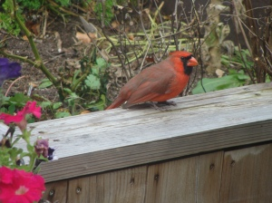 This fellow is exploring what is left of the herb garden and fining some Cilantro seeds to eat