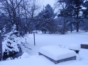 Snowy herb garden.
